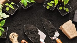 Eager to get planting? Here's when you should start your home garden!