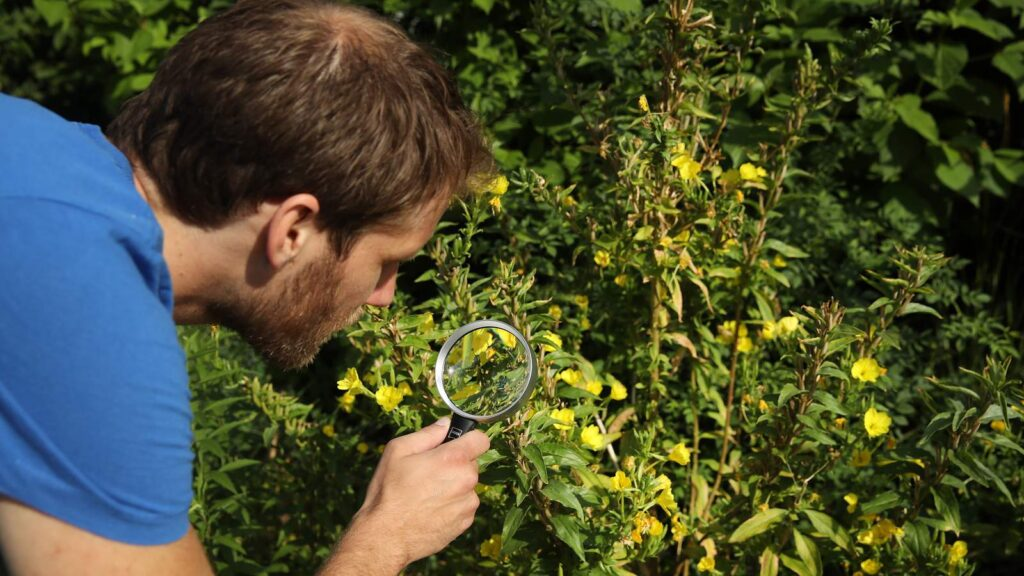 How to deal with those pesky pests invading your garden