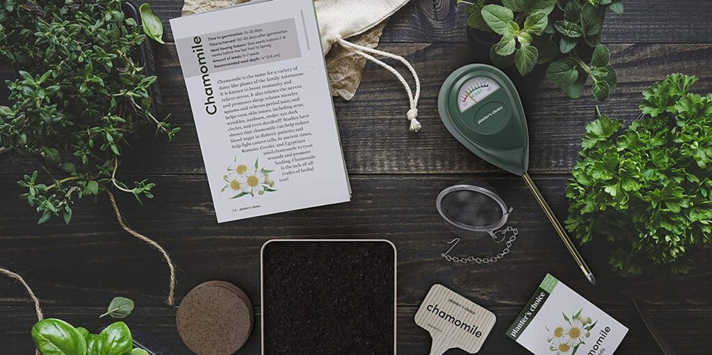 The Best Home Gardening Kits You Can Buy Online