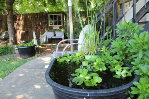 Get growing for a chance to win cash with the home garden contest open to Pottstown, Boyertown residents | Lifestyle