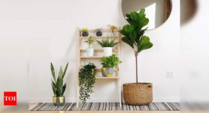 Plant stands that will upgrade your at-home garden | Most Searched Products