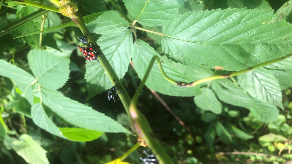 LebTown's home garden guide on curbing the spotted lanternfly