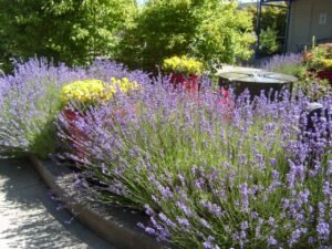 How gardens can create hope and wellbeing in uncertain times